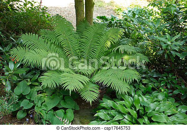 Shrubs Green Fern In A Beautiful Typical English Garden