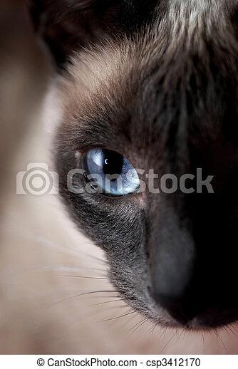 Siamese Cat - csp3412170