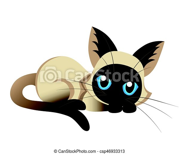siamese cat the lovely kitten with blue eyes fluffy on a vector rh canstockphoto ca