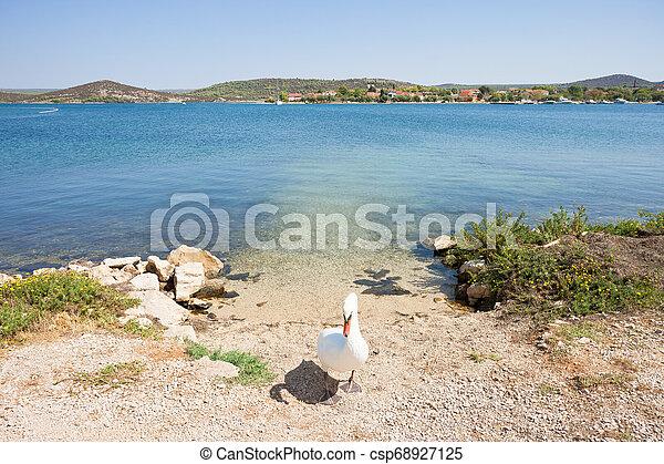 sibenik-knin, schwan, -, stellvertretend, kroatien, wärter, tor, bilice - csp68927125