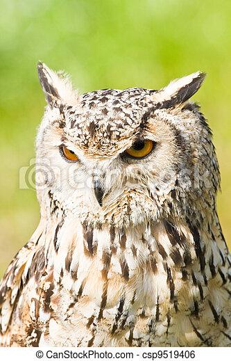 Siberian Eagle Owl or Bubo bubo sibericus - csp9519406