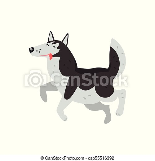 Siberian husky dog character running putting his tongue out vector Illustrations on a white background - csp55516392