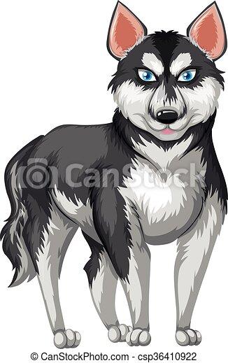 Siberian Husky With Black And White Fur Illustration