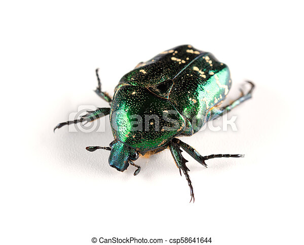 side view glossy bettle on a white background close up - csp58641644