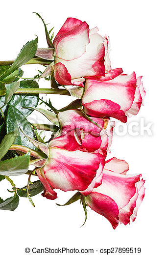 Side view of bunch of pink roses isolated on white background side view of bunch of pink roses isolated on white csp27899519 mightylinksfo