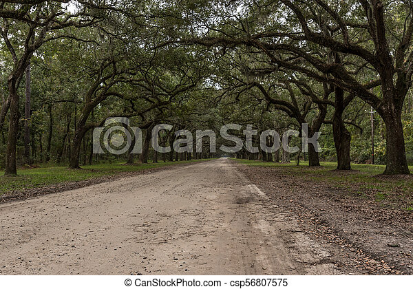 Side View of Dirt Road with Live Oak Trees - csp56807575