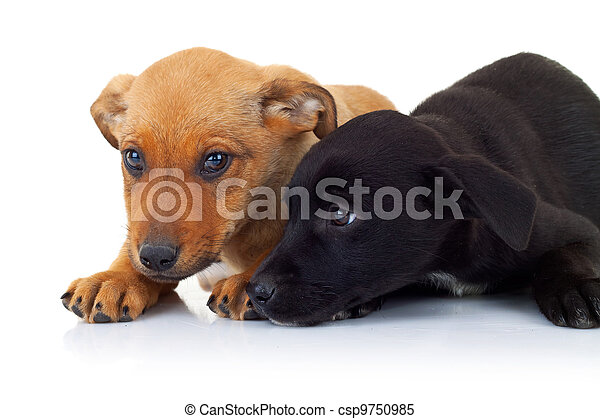 side view of two stray puppy dogs lying down - csp9750985