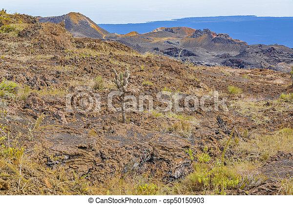 Sierra Negra Volcano, Galapagos, Ecuador - csp50150903