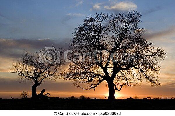 silhouette, arbres - csp0288678