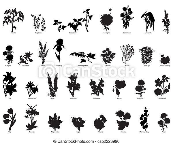 silhouette, bacche, fiori - csp2226990
