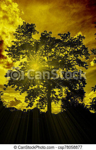 silhouette big tree with light ray on sunset . - csp78058877