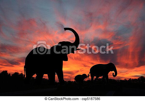 silhouette, coucher soleil, éléphants - csp5187586