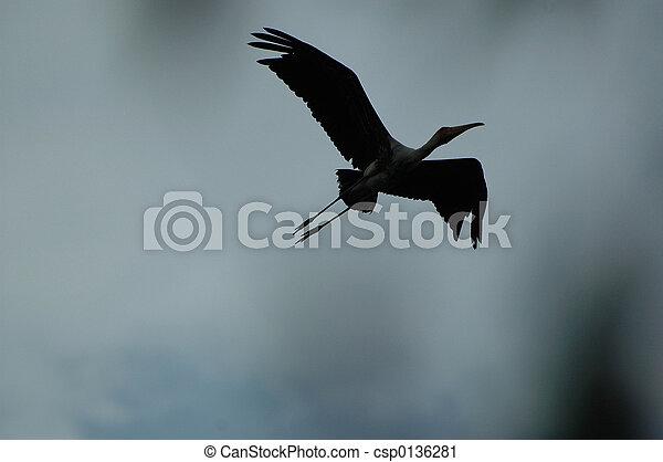 silhouette egret egret in flight