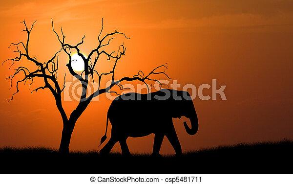 silhouette, elefant - csp5481711