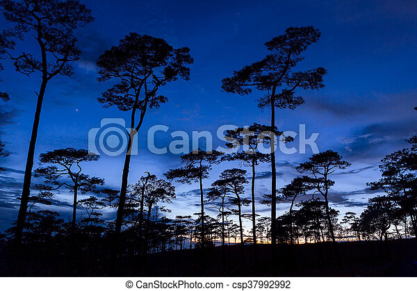silhouette landscape with pine tree - csp37992992
