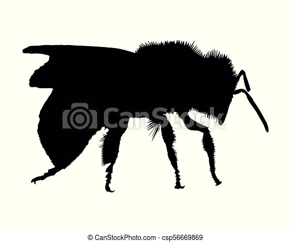 Silhouette of a bee on white background - csp56669869