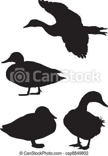 Silhouette of a duck - csp8849802
