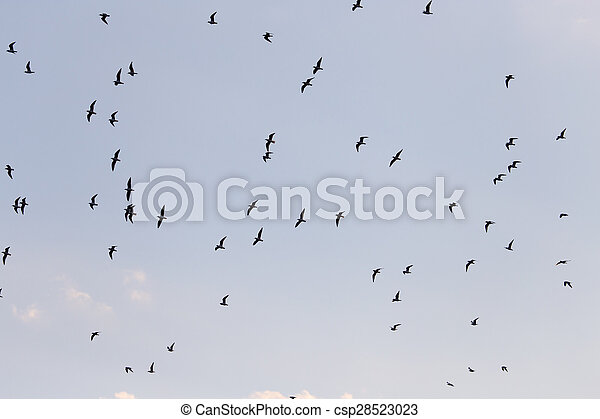 silhouette of a flock of birds in the blue sky - csp28523023