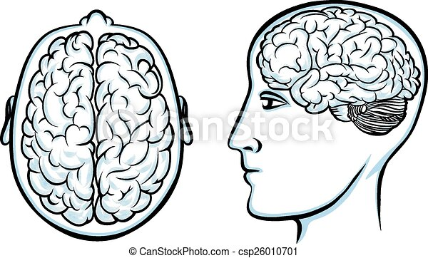 Silhouette Of A Human Head With Brain Psychology And Anatomy And