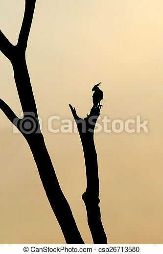 Silhouette of a Long-crested Eagle on a tree - csp26713580