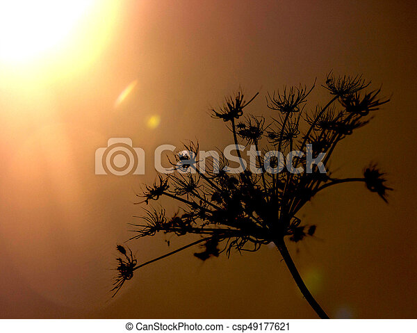 silhouette of a plant in the sun - csp49177621