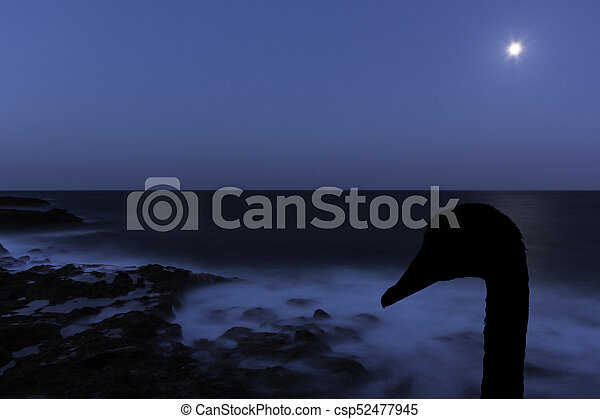 Swans By Moonlight >> Silhouette Of A Swan With Moon Over The Ocean Los Cocoteros