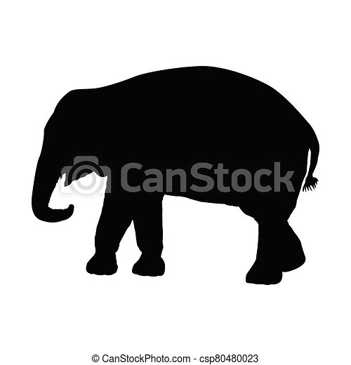 Silhouette of an elephant on a white background. Vector illustration - csp80480023