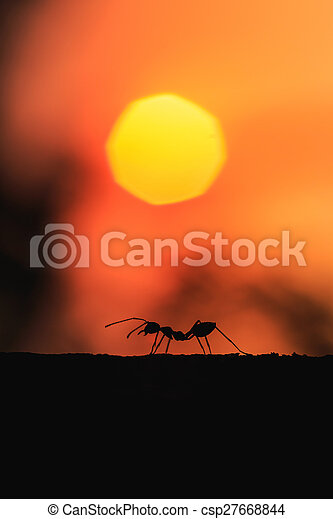 Silhouette of ant walking on the tree with sunset background - csp27668844