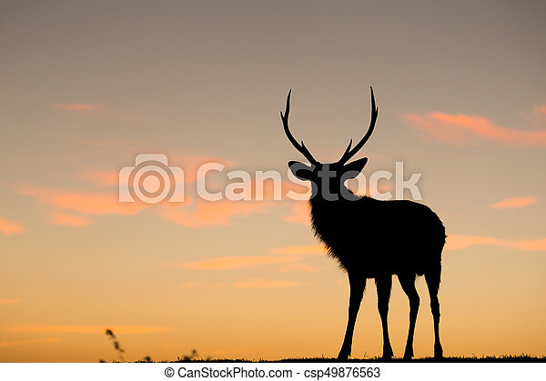 Silhouette of deer with sunset - csp49876563