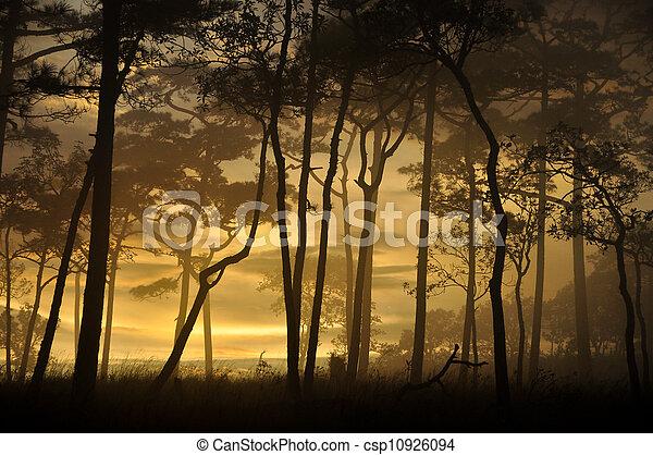 silhouette of pine - csp10926094