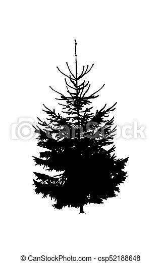 Silhouette of pine tree. - csp52188648