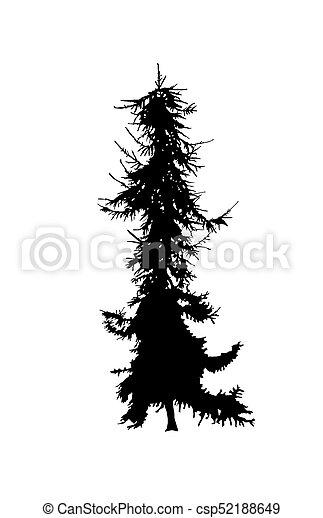 Silhouette of pine tree. - csp52188649