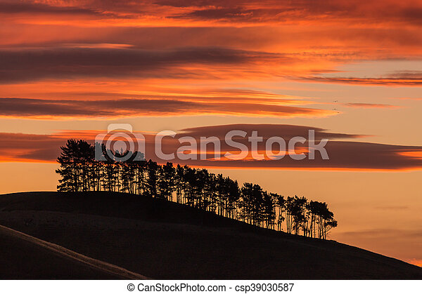 silhouette of pine trees at sunset - csp39030587