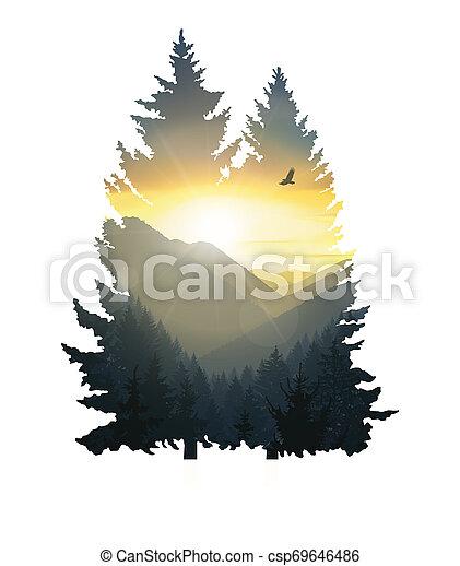 Silhouette of pine trees. - csp69646486