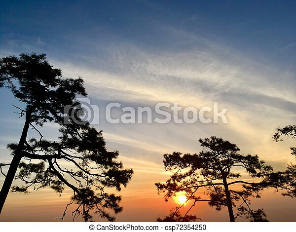 Silhouette of pine trees with sunset light and blue sky - csp72354250