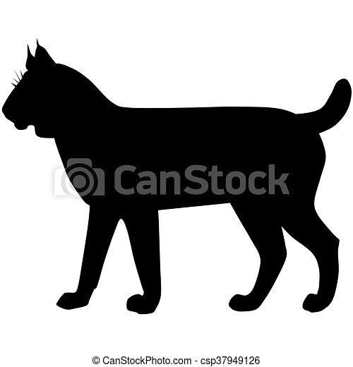 silhouette of the wild lynx bobcat