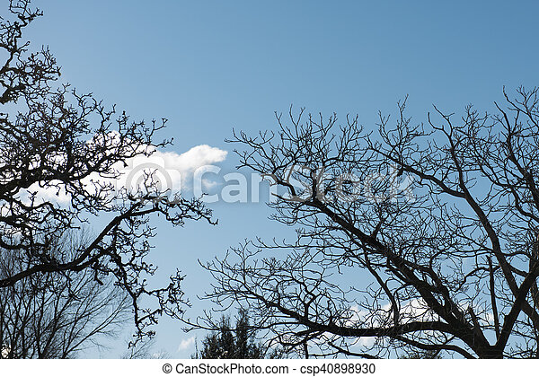 Silhouette of tree branches against a blue sky - csp40898930