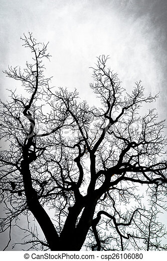 silhouette of tree branches  - csp26106080