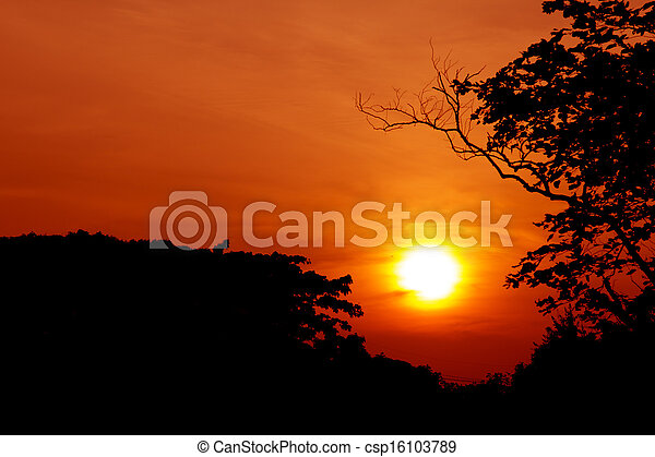 silhouette of tree with sunset - csp16103789