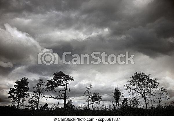 Silhouette of trees - csp6661337