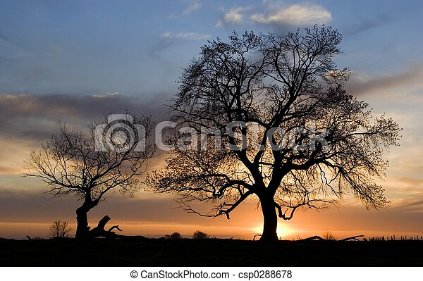 silhouette of trees - csp0288678
