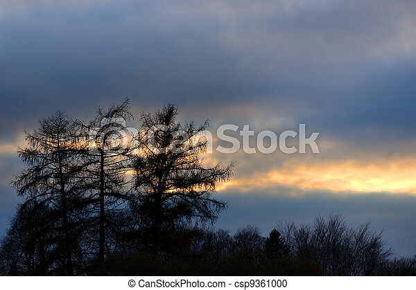 Silhouette of trees - csp9361000