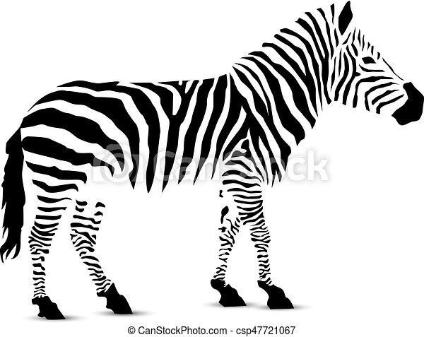 silhouette of zebra zebra silhouette of black stripes clip art rh canstockphoto com zebra vector free zebra vector free download