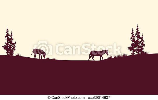 Silhouette of zebra in fields - csp39014637