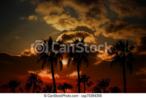 Silhouette palm trees on sunset - csp70384356