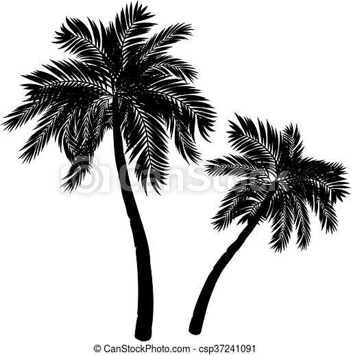 Silhouette palmier silhouette arbre exotique arri re plan paume noir blanc - Dessin palmier ...