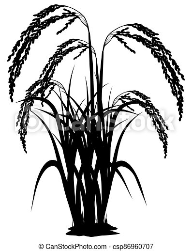 silhouette rice plant on white background vector design - csp86960707
