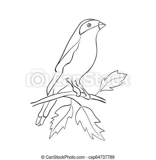 silhouette, sedere, -, vettore, ramo, uccello - csp64737789