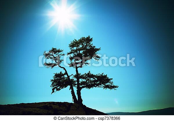 silhouette, sole, albero, lago, contro, baikal - csp7378366