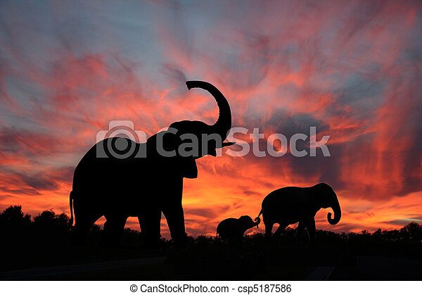 silhouette, sonnenuntergang, elefanten - csp5187586